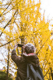 Male tourist holding smartphone taking photo of ginkgo leaf in a. Utumn urban park Stock Photo
