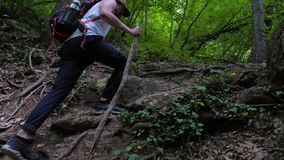 A male tourist with a wooden stick in his hand walks in the woods along a hiking trail. A male tourist with a wooden stick in his hand walks in a mountain stock video