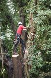 Male Tree Surgeon with a chainsaw. Starts to climb a tree stock image