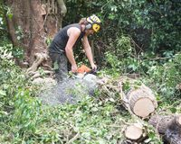 Male Tree Surgeon using a chainsaw on the ground. To cut a falled tree into small pieces stock photos