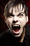 Male vampire screaming. At the camera, showing his fangs Stock Image
