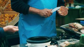 Male vendor shelling scallops at local seafood stall on the marketplace. Male vendor shelling scallops at local sea food marketplace Stock Image