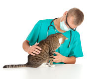 Male vet with cat in surgery. Male vet in green protective uniform and mask with cat in surgery Stock Photos