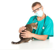 Male vet with cat in surgery Royalty Free Stock Image