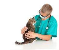 Male vet with cat in surgery. Male vet in green protective uniform and mask with cat in surgery Royalty Free Stock Photo