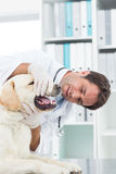 Male vet examining teeth of dog Stock Photography