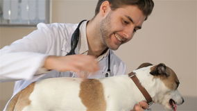 Male vet holding the dog on the vet table stock video footage