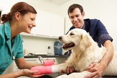Male Veterinary Surgeon Treating Dog In Surgery. Smiling Royalty Free Stock Images