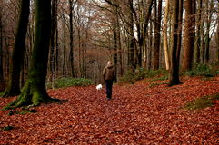 Male walking the dog Stock Images