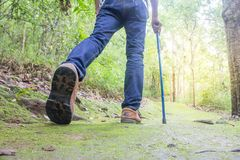 Male walking in a forest, Holiday activities. Business Royalty Free Stock Photo