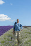 A male walking through lavender field. In the summer Royalty Free Stock Photos