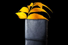 Male wallet isolated on a black background. With autumn leaves Stock Images