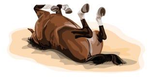 Male warmbloodhäst som är rullande i sand Royaltyfri Bild