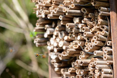 Male wild bees flying in front of insect shelter. Stock Photos