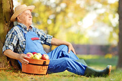 Male worker in dungarees with basket of apples sitting in orchar Stock Photos