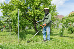 Male worker with power tool string lawn trimmer mo. Wer cutting grass royalty free stock photo