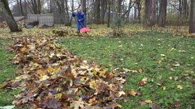 Male worker rake leaves falling from tree in backyard. 4K stock video