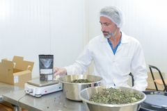 Male worker weighing ingredients. Weigh Stock Photography