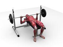 Male workout - bench press Royalty Free Stock Photo