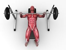 Male workout - bench press Stock Photography