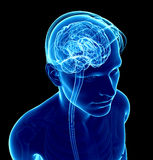 Male xray brain anatomy artwork Stock Photo