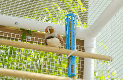 Male Zebra Finch in the Cage Royalty Free Stock Photos