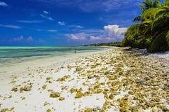 Malediven - Seegras auf Strand Stockfotos