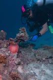 Maledivisches anemonefish und Taucher Lizenzfreie Stockfotografie
