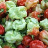 Maledivisches Gemüse Lizenzfreie Stockfotografie