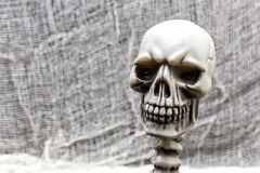 The Malefic Portrait. A portrait of a skull Royalty Free Stock Photo
