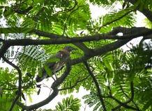 Maleise nachtreiger, wilde vogel in Vietnam stock afbeelding