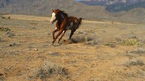 Malen Sie das Pferd, das in einen Lauf sich lehnt Stockfotos