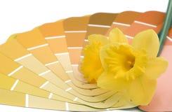 Malen Sie Farben des Hauses im Frühjahr Stockbild