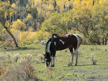 Malen Sie Pferd Stockbild