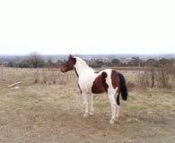 Malen Sie Pferd Lizenzfreies Stockbild
