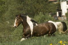 Malen Sie Pferd auf dem Lack-Läufer Lizenzfreies Stockbild