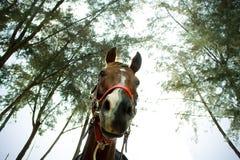 Malen Sie Pferd in der Weide stockfotos