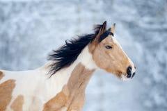 Malen Sie Pferd mit Hauptnahaufnahme des blauen Auges im Winterhintergrund lizenzfreies stockfoto