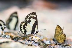 Malen Sie Schmetterling Lizenzfreie Stockfotos