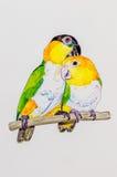 Malerei von zwei Caiquepapageien Stockfotos