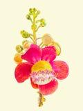 Malereiaquarell bunt vom Salzblumenblumenstrauß im weißen Hintergrund lizenzfreie stockfotos