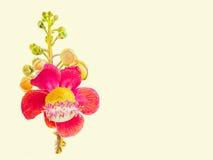 Malereiaquarell bunt vom Salzblumenblumenstrauß im weißen Hintergrund stockbild