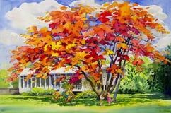 Malereiaquarell-Landschaftsursprüngliche rote orange Farbe von Pfaublumen lizenzfreie abbildung