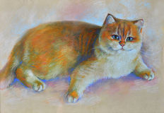 Malereikatzen-Briten-shorthair Stockfoto