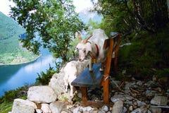 Malerische Ansicht über Geirangerfjord in Norwegen Lizenzfreie Stockfotos