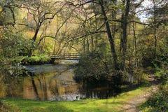 Malerische Brücke im Wald Stockfotografie