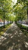 Malerische grüne Straße des sonnigen Frühlinges lizenzfreies stockbild