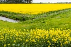 Malerische Landschaft in den gelben und grünen Farben Lizenzfreie Stockfotografie