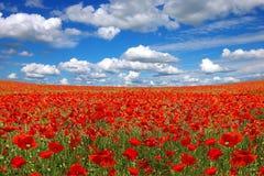Malerische Landschaft mit Mohnblumeplantage stockbilder
