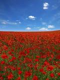 Malerische Landschaft mit Mohnblumeplantage Lizenzfreie Stockfotografie